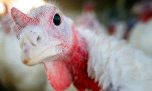A-turkey-007